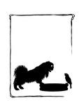Koko the Pekinese Dog with Jack Sparrow