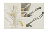 Antennularia: Hydrozoan