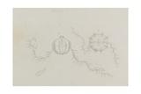 Cydippe: Sea Gooseberry