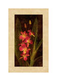 Orchidée Giclée par John Seba