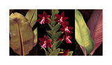 Red Orchids and Palm Leaves