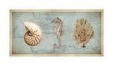 Trésors de mer I Giclée par Deborah Devellier