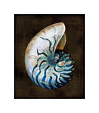 Ocean Treasure IV Giclée par Caroline Kelly