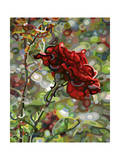 Last Rose of Summer Giclée par Mandy Budan