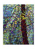 Pine Sprites Giclée par Mandy Budan