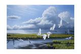 Summer Storm Egrets