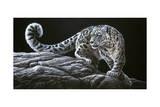 Léopard des neiges Giclée par Jeremy Paul