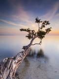 Water Tree X