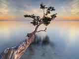 Water Tree XIV