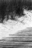 Brush Sand Wood