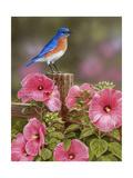 Bluebird with Hibiscus