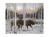 Crépuscule en forêt Giclée par Jeff Tift