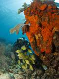 Technical Diver on Coral Reef