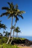 Palm Trees and Beach along the Southern Maui