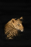 Leopard (Panthera Pardus)  Madikwe Game Reserve  South Africa  Africa