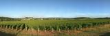 Beaujolais Vineyard  Jully-Les-Buxy  Saone-Et-Loire  Burgundy  France