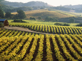 Vineyard at Domaine Carneros Winery, Sonoma Valley, California, USA Papier Photo par Green Light Collection