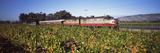 Napa Valley Wine Train Passing Through Vineyards  Napa Valley  California  USA