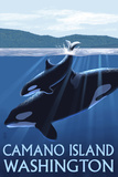 Camano Island  Washington - Orca and Calf