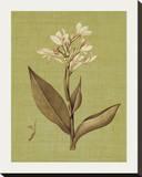 Botanica Verde II