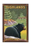 Highlands  North Carolina - Black Bear in Forest
