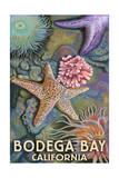 Bodega Bay  California - Tidepool