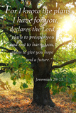 Jeremiah 29:11 - Inspirational