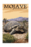 Tortoise - Mojave National Preserve  California