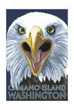 Camano Island  Washington - Eagle Up Close
