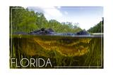 Florida - Alligator Underwater