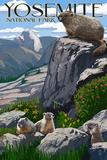 Yosemite National Park  California - Marmots