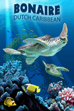 Bonaire  Dutch Caribbean - Sea Turtle Swimming