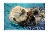 San Simeon  CA - Sea Otter