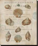 Shell Collection II