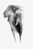 Artistic Black And White Elephant Poster par Donvanstaden