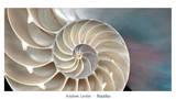 Nautiles Reproduction d'art par Andrew Levine