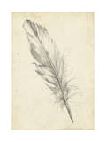 Feather Sketch III