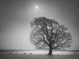 Evening Light II