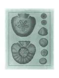 Spa Shell Collection VI Reproduction d'art par Vision Studio