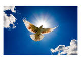 Peace Dove in-front of the sun