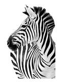 Richard The Zebra Reproduction d'art