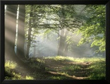 Chemin dans la forêt Reproduction encadrée
