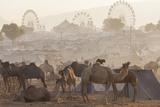 Pushkar Camel Fair  Pushkar  Rajasthan  India