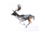 Evening Buck (Fallow Deer)  2007