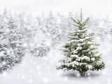Fir Tree in Thick Snow Papier Photo par Smileus