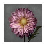 From My Garden 3-Gray