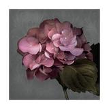From My Garden 2-Gray