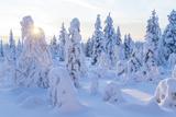 Winter in Riisitunturi National Park  Lapland  Finland