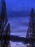 Conjunction of Young Crescent Moon and Venus as a Small Crescent at Dusk  Thru Silhouetted Trees
