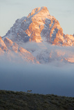 On a Beautiful Morning  a Pronghorn Walks a Ridge as the Grand Teton Rises from the Clouds